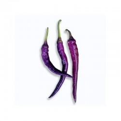 Cayenna Purple seeds