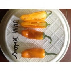 Juma! Yellow seeds