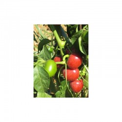 Dried Cherry Pepper