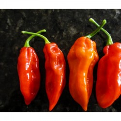 Fatalii red dried