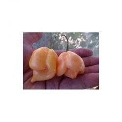 Trinidad Moruga Scorpion Peach seeds