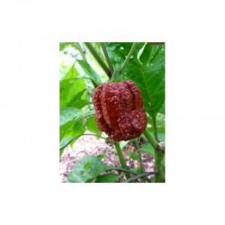 Borg 9 Chocolate seeds