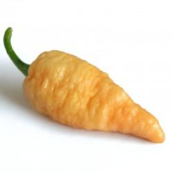 Bengal Naga Peach seeds