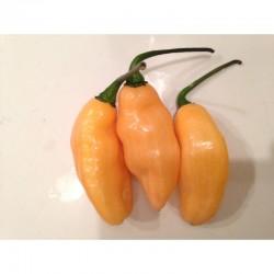 Pimenta da Neyde Yellow seeds